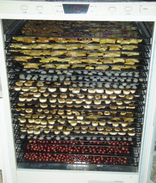 Top to bottom: Carambolas, Longans, Bananas and Muntingia in the dehydrator.
