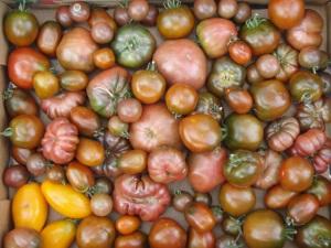 dark tomatoessmall