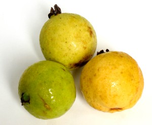Tropical fruit bee heaven farms blog guava guayaba in spanish guavas ccuart Image collections